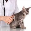 Ветеринарные клиники в Петропавловске-Камчатском